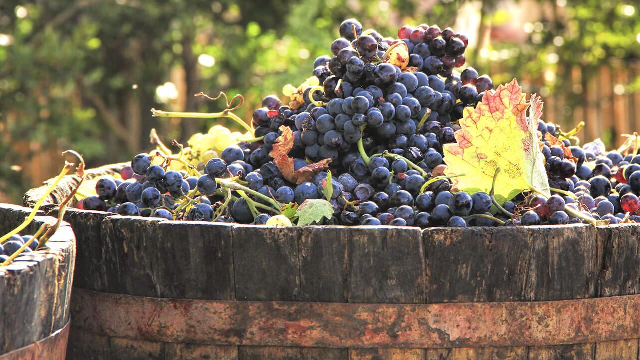 atout-sante-vin-rouge